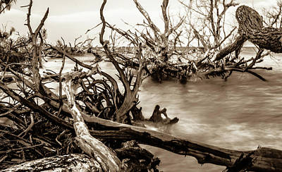 Food And Flowers Still Life - Old Dead Trees On Shores Of Edisto Beach Coast Near Botany Bay P by Alex Grichenko