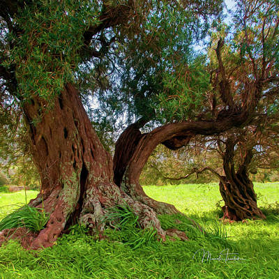 Photograph - Old Olive Trees by Manolis Tsantakis