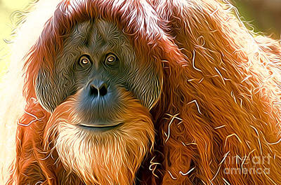 Photograph - Orangutan  by Andrew Michael