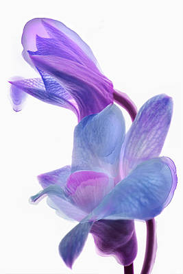 Photograph - Orchid Morphing II by Leda Robertson