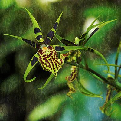 Photograph - Orchid by Richard Goldman