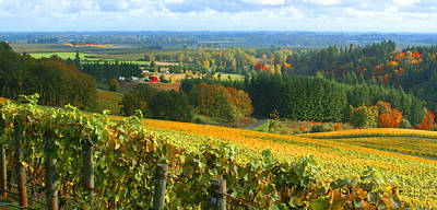 Wine Photograph - Oregon Wine Country by Margaret Hood