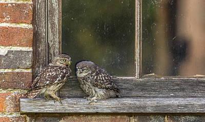 Diamondback Digital Art - Owl by Carmine Danhauer