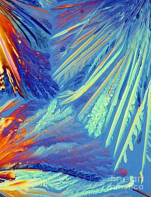 Oxytocin Crystals, Light Micrograph Art Print by Pasieka