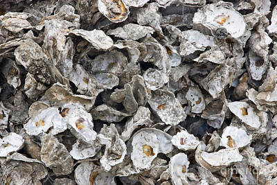 Spats Photograph - Oyster Shells by Inga Spence
