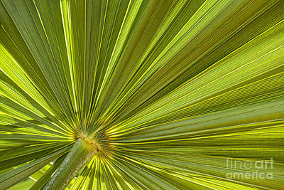Photograph - Palm Leaf by Elena Elisseeva