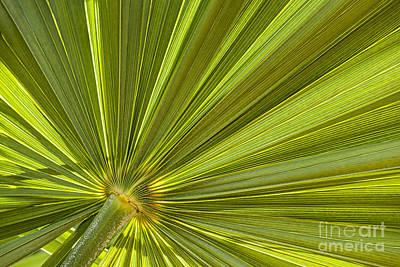 Palm Leaf Print by Elena Elisseeva