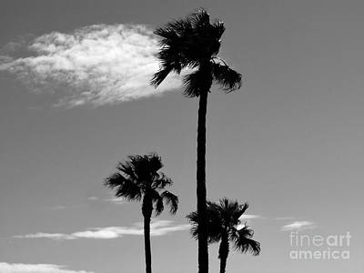 Photograph - 3 Palms by Janice Westerberg