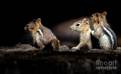 Photograph - 3 Pals by David Millenheft