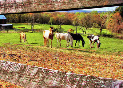 Photograph - Pasture Friends by JAMART Photography