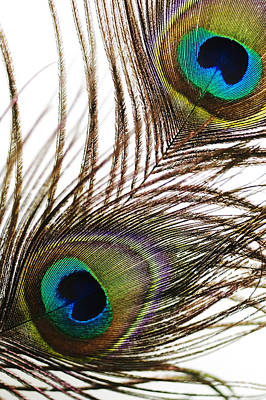 Strobe Photograph - Peacock Feathers by Mary Van de Ven - Printscapes