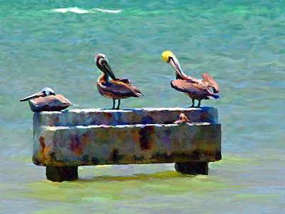 Painting - 3 Pelicans by David  Van Hulst