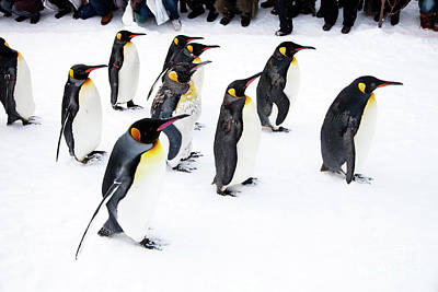 Photograph - Penguins by Kati Finell
