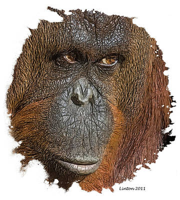 Orangutan Digital Art - Pensive Primate by Larry Linton