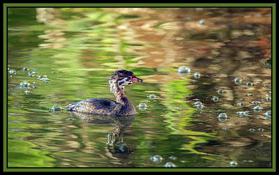 Photograph - Pied-billed Grebe Bubbles by Tam Ryan