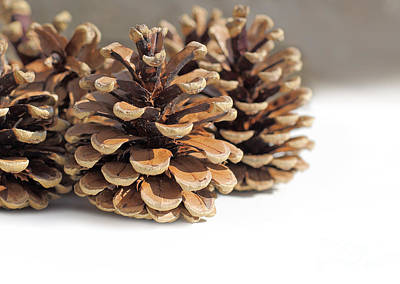 White Background Photograph - 3 Pine Cones by Susan Wall