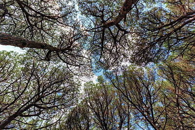 Pinewood Forest, Cecina, Tuscany, Italy Art Print by Elenarts - Elena Duvernay photo