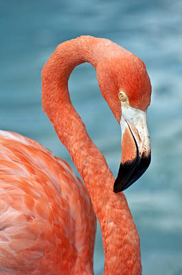 Pink Flamingo Nature Photograph - Pink Flamingo. by Fernando Barozza