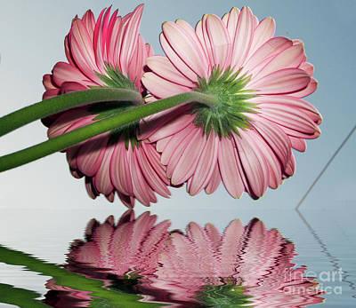 Pink Gerbers Art Print