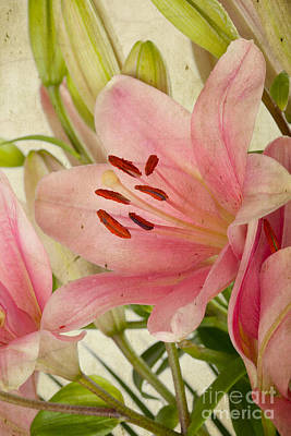Royalty-Free and Rights-Managed Images - Pink Lilies by Nailia Schwarz