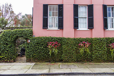 Photograph - 3 Pink Windows And Ivy In Charleston  by John McGraw