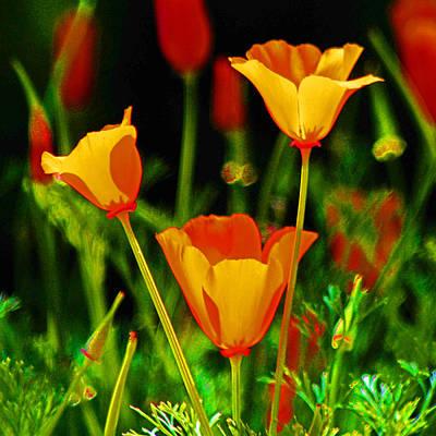 Digital Art - 3 Poppy's by Joseph Coulombe