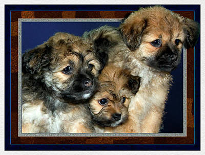 Retrievers Digital Art - 3 Pups by Harry Hunsberger