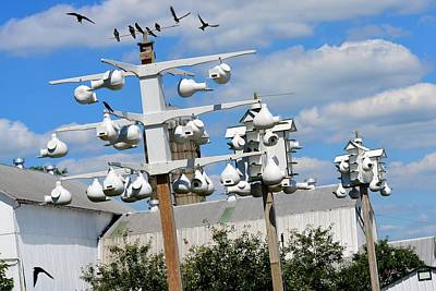 Photograph - 3 Purple Martin Houses by Tana Reiff