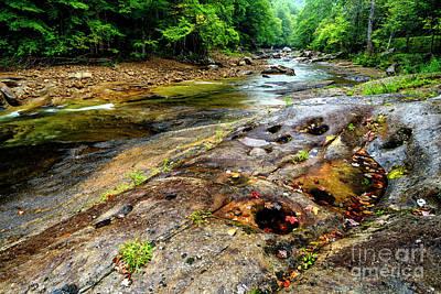 Photograph - Rainy Day On Williams River by Thomas R Fletcher