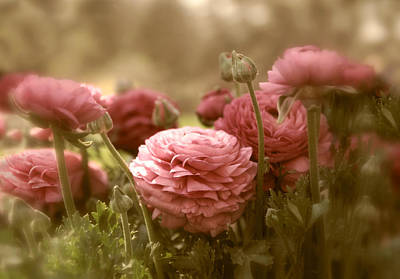 Photograph - Ranunculus by Jessica Jenney