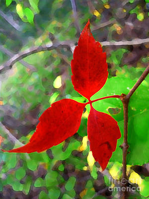 Photograph - 3 Red Leaves by Jeff Breiman