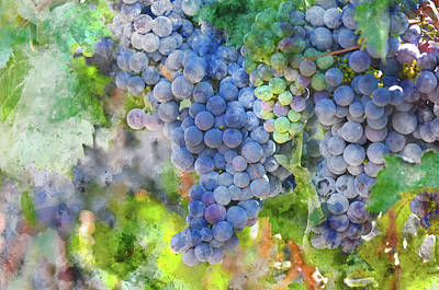 Vintage Wine Lovers Photograph - Red Wine Grapes On The Vine by Brandon Bourdages