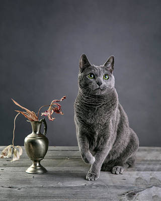 Elegant Cat Photograph - Russian Blue Cat by Nailia Schwarz