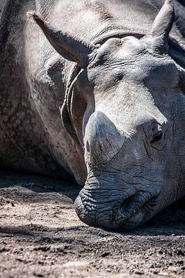 Photograph - San Diego Zoo, California by Richard Smukler