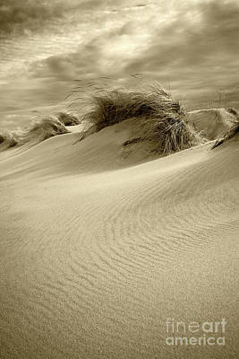 Photograph - Sand Dunes by Timothy Johnson
