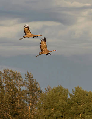 Photograph - Sandhill Crane Pair by Dee Carpenter