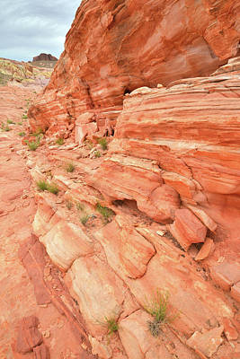 Photograph - Sandstone Wall In Valley Of Fire by Ray Mathis