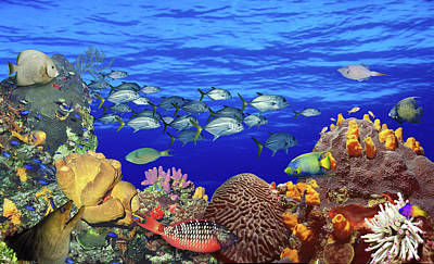 School Days Photograph - School Of Fish Swimming Near A Reef by Panoramic Images