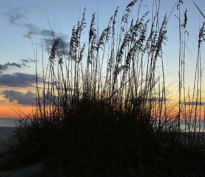 Photograph - Sea Oats  by David Lee Thompson