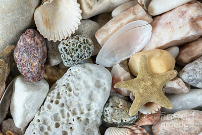 Photograph - Sea Pebbles With Shells And Starfish by Michal Boubin