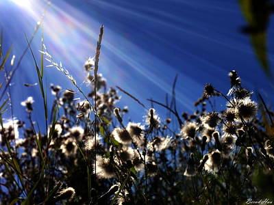 Photograph - Seasons by Bernd Hau