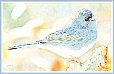 Slate-colored Junco, Snowbird, Male, Animal Portrait Art Print