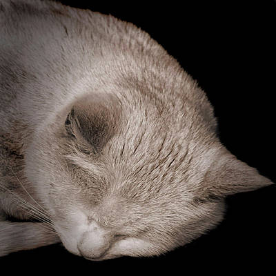 Sleeping Cat Art Print by Martin Newman