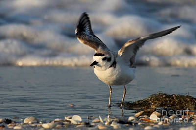 Nighttime Street Photography - Snowy Plover by Meg Rousher