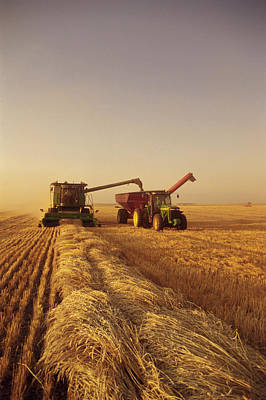 Without People Photograph - Spring Wheat Harvest, Tiger Hills by Dave Reede