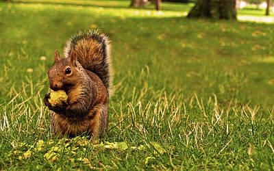 Squirrel Digital Art - Squirrel                      by F S