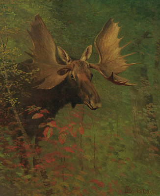 Study Of A Moose Art Print by Albert Bierstadt