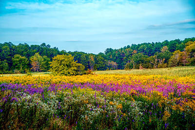 Photograph - Summer Meadow by Lilia D