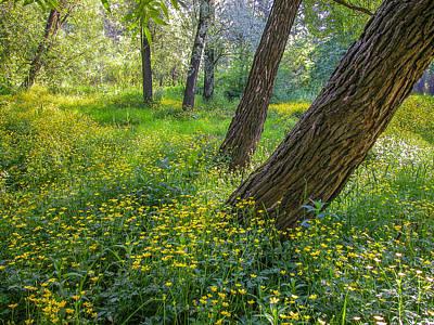 Photograph - Summer Time by Vladimir Kholostykh