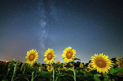 Sunflower Galaxy Art Print by Ryan Heffron